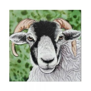 "Black Faced Ram Ceramic Tile 8"" x 8"""